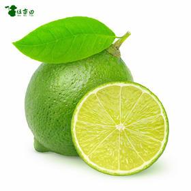 【台湾无籽翡翠青柠檬---真正的维C之王,鲜嫩酸爽,清香多汁,皮薄无籽,新鲜采摘,酸爽十足】