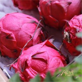 食当季  金都1号【龙珠】 红心火龙果  五斤礼盒装    约20号发货!