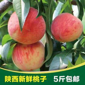陕西秦王水蜜桃 现摘现发 桃子水果 新鲜水果 非油桃黄桃香甜多汁脆爽5斤