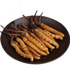 【一年仅卖一个月!】正宗青海玉树 新鲜冬虫夏草 10根装 0.5-0.8克/根 顺丰冷链配送