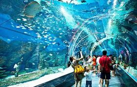 行走海底探索海洋神奇生物|上海长风海洋世界5月28日报名啦