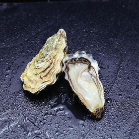 法国黄金生蚝 Ostre'Or Oyster | 法国空运抵达,每周到货两次(星普利五星推荐)