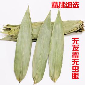 干粽叶包粽子的大粽子叶新鲜纯天然粽叶干粽子叶100张