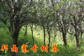 2019年邦丙古树茶纯料私人高端定制320元/公斤