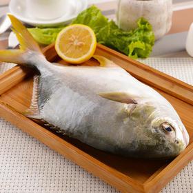 【拼团包邮】北海野生金鲳鱼(2条/件,总净重1kg,限乌市地址!)