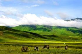 【九色甘南】年保玉则、扎尕那村、若尔盖、拉卜楞寺、尕海湖、九曲黄河环线精品7日游