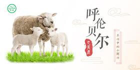 """【清真】过年送礼,来点""""鲜""""的吧—呼伦贝尔巴尔虎羊肉"""