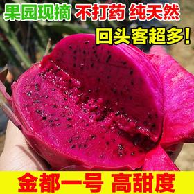 金都一号红心火龙果 红肉新鲜水果 无催熟 无喷药 健康营养水果 全国包邮