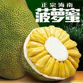 【现摘现发】海南三亚菠萝蜜 热带水果 现摘现发 又香又甜 全国包邮