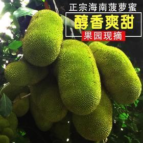 海南三亚菠萝蜜热带水果现摘现发又香又甜14-30斤1个包邮