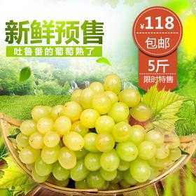预售新疆吐鲁番有机无核鲜葡萄5斤顺丰包邮