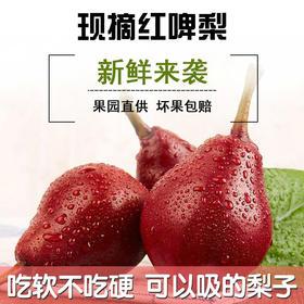 陕西大荔渭南红啤梨当季水果吃软不吃硬可以吸的梨子现摘5斤包邮