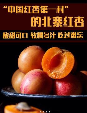 中国第一杏北寨红杏顺丰包邮