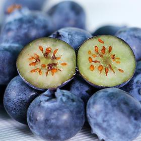 【限乌市地址!】新鲜精品蓝莓 口感酸甜(125g*4盒/件,限天沙新水四个区配送!)