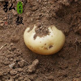 【弘毅六不用生态农场】六不用 老品种 黄皮土豆 自留种 3斤一份