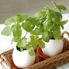 空气净化仿真蛋壳小盆栽   文具