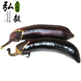 【弘毅六不用生态农场】六不用茄子3斤/份