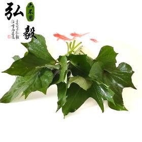 【弘毅六不用生态农场】六不用新鲜红薯叶 红薯尖 2斤/份