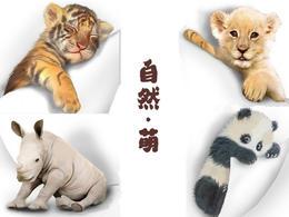 包邮 自然·萌可爱动物系列笔记本套装(一套10本)