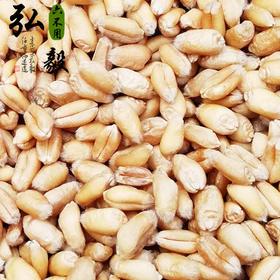 【弘毅六不用生态农场】传统小麦粒,煮粥用,10斤/份