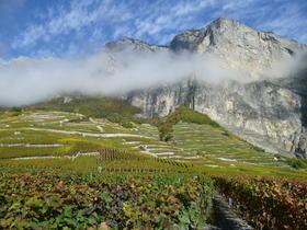 【上海】7月26日 当瑞士美酒遇到瑞士巧克力 La Rodeline精品酒庄珍稀佳酿品鉴会