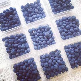 预售 现摘蓝莓 2人拼团69元12盒 每盒125g 7月29日开始配送仅配送马鞍山本地 【大果已售罄】