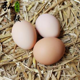 【弘毅生态农场】果园散养 林下散养 柴鸡蛋土鸡新鲜鸡蛋 30枚/份 限京沪鲁地区