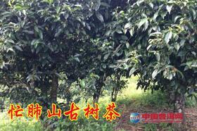 2019年忙肺山古树茶纯料私人高端定制680元/公斤