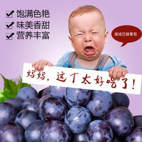 南大门助农|蒲城绿色无公害巨峰葡萄 6斤精品装 江浙沪包邮