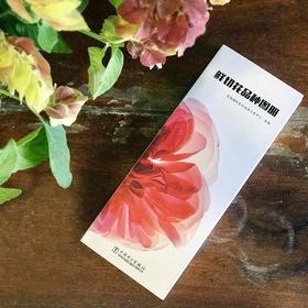 鲜切花品种图册 | 基础商品
