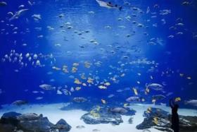 暑期亲子嘉年华丨罗源湾海洋世界1大1小仅需288元!