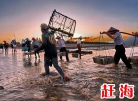 吃蛏到底、葡萄采摘!7月29、30日一起来连江赶海一号,还赠送海鲜大餐、篝火狂欢!