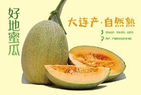 大连本地优质蜜瓜 自然成熟 口感酥脆 甜度高  2只/箱