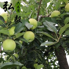 【弘毅六不用生态农场】六不用鲜苹果 嘎啦 不套袋 4斤/份