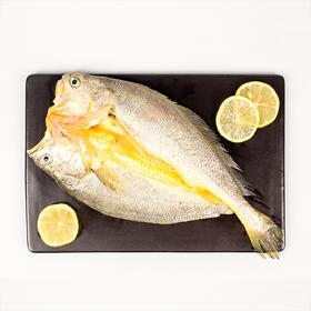 【生鲜美味】福建宁德醇香黄鱼鲞海鲜 250g*6条