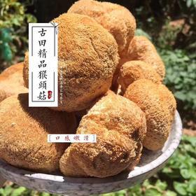 古田猴头菇250g干货 农家自产蘑菇干货 新鲜野生猴头菇
