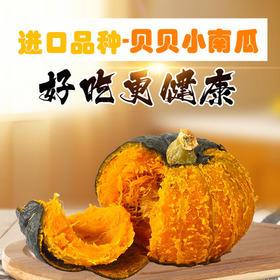 【最好吃】贝贝小南瓜 日本品种 口感甜面 板栗味道  产地直发