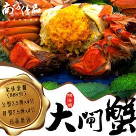 【至佳888型】公蟹3.5两4只 母蟹2.5两4只 正宗阳澄湖大闸蟹鲜活螃蟹礼盒装顺丰包邮