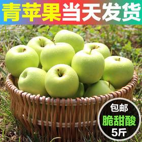 【美货】新鲜应季青苹果水果 当季孕妇吃的水果酸甜青苹果现摘5斤