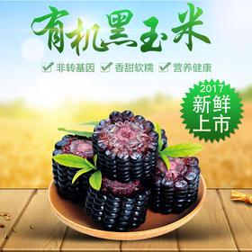 新鲜上市有机黑玉米5/10根真空包装  非转基因