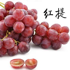 预售【产地直供】敦煌新鲜红提葡萄