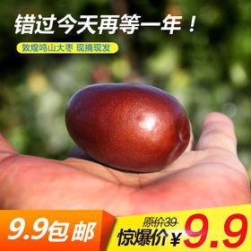 预售【产地直供】敦煌新鲜鸣山大枣