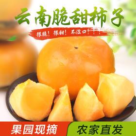 【云南甜脆柿子】 新鲜脆柿子 脆甜苹果柿子 日本次郎柿子5斤装