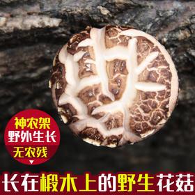 优选|康在此 中国舌尖推荐湖北神农架房县椴木花菇150g
