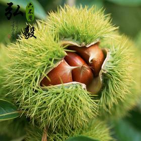 【弘毅六不用生态农场】板栗,沂蒙山油栗老品种,2斤/份