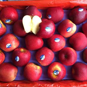 新西兰红玫瑰苹果,20颗78包邮