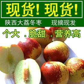 【美货】现货陕西大荔冬枣 新鲜孕妇水果鲜枣红枣甜大枣子3斤1500g