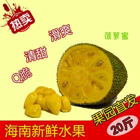 【南海网微商城】海南热带新鲜水果菠萝蜜 苞大肉厚 约20斤