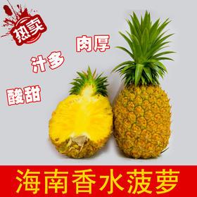 【南海网微商城】海南新鲜香水菠萝 约5斤