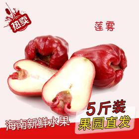 【南海网微商城】海南黑金刚莲雾 甜脆可口 5斤
